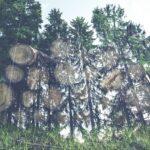 Mise à disposition gratuite de bois résineux